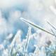 Eerste natuurijsbaan van het land is geopend: vannacht vroor het -10,8 graden