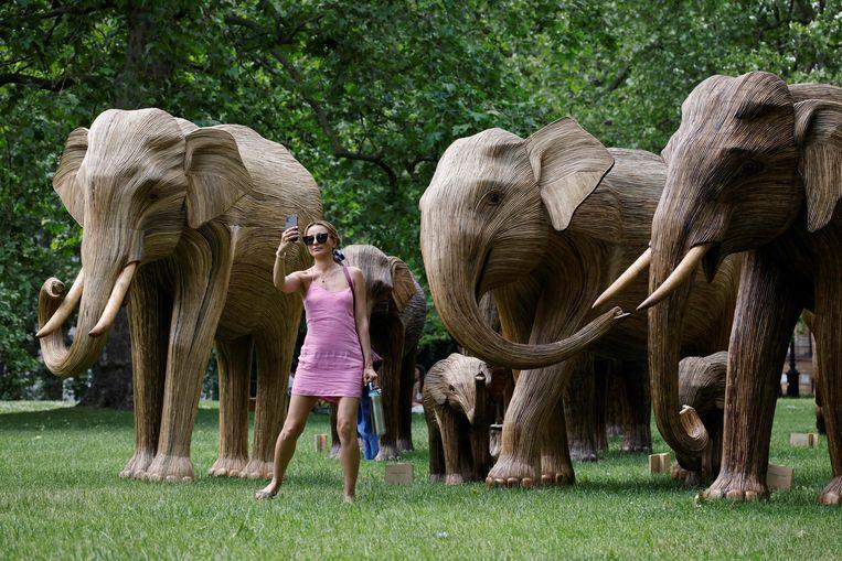 Een vrouw maakt een selfie bij een kudde Aziatische olifanten in het Londense Green Park. De sculpturen zijn neergezet door de Elephant Family en The Real Elephant Collective; het doel van de organisaties is om kennis over olifanten te verspreiden en mensen te leren hoe ze de biodiversiteit op aarde kunnen beschermen.  Beeld AFP
