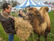 'Werkloze' ondernemer verzamelt in Laren eten voor hongerige circusdieren