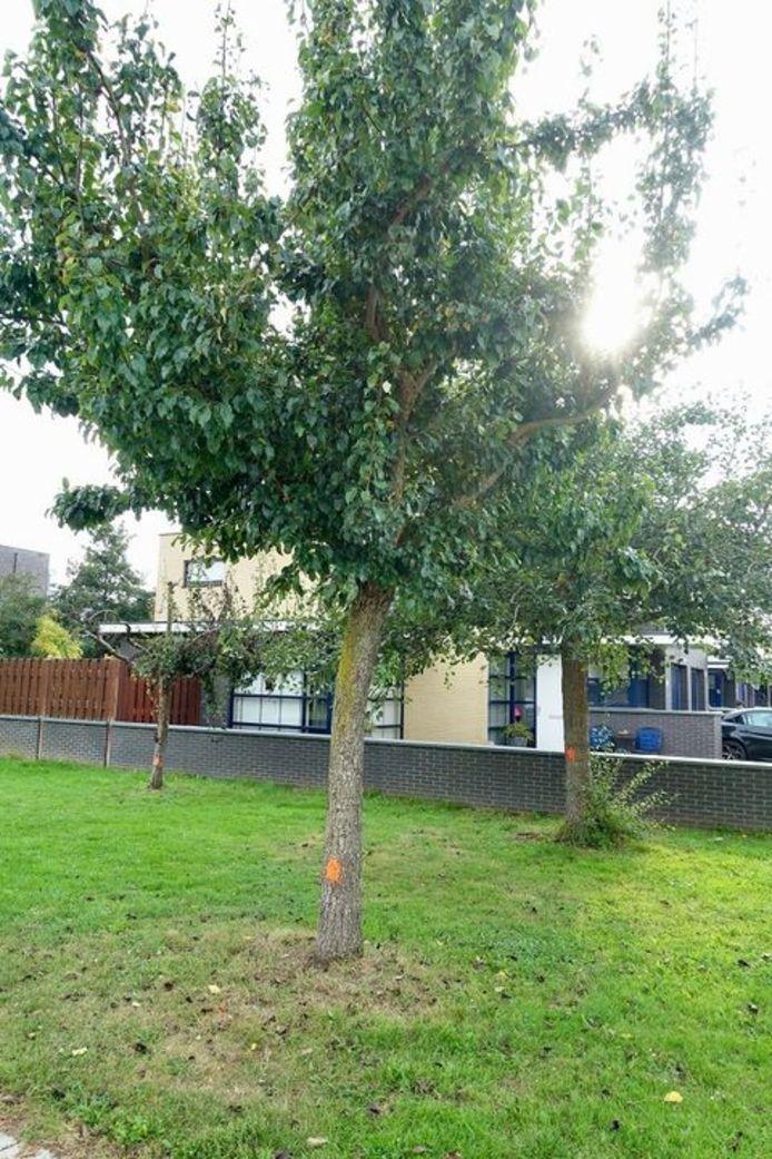 De gemeente IJsselstein gaat vijftien perenbomen kappen omdat ze zijn aangetast met bacterievuur.