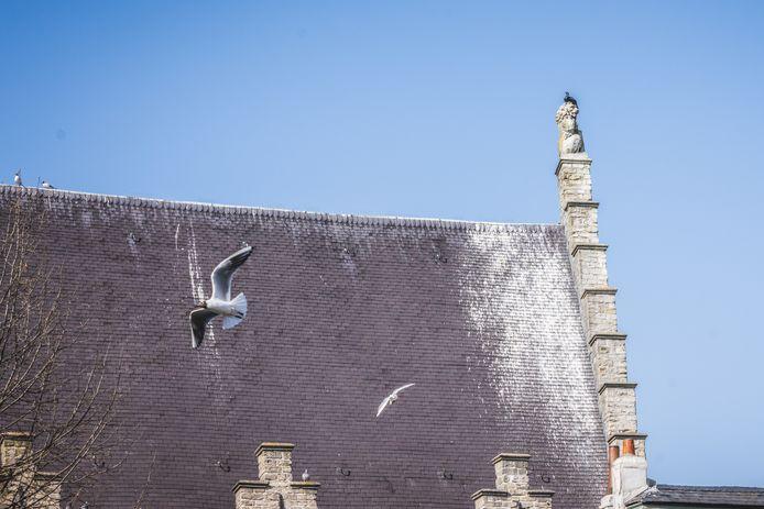 De aalscholver schilderde al een paar vierkante meter dak wit.