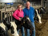 Kalverliefde bracht Ingrid en Rob tot de koeien in Doornenburg