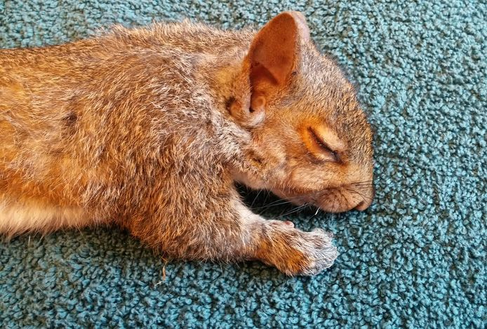 Wildlife Rehabilitation Center at Wisconsin Humane Society