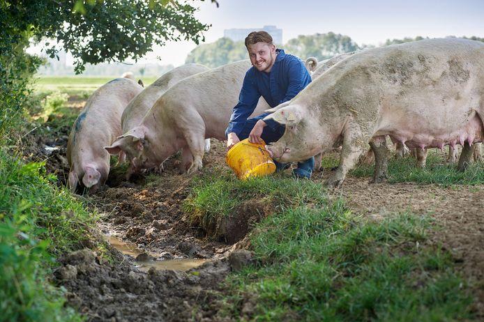 Jop van Toor tussen zijn varkens.