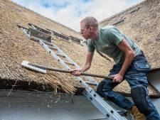 Een tekort aan riet voor daken: 'Ik kan nog één grote villa bedekken, daarna is het op'