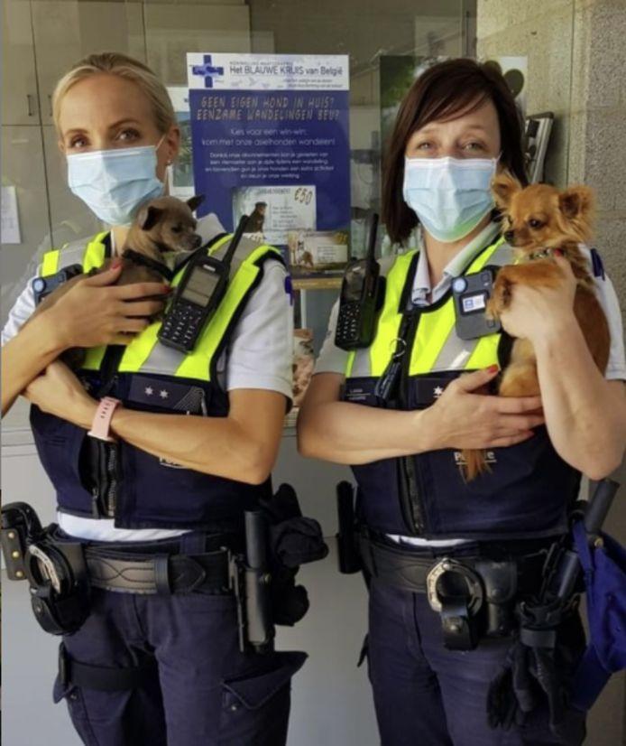 Twee van de in beslag genomen verwaarloosde hondjes.