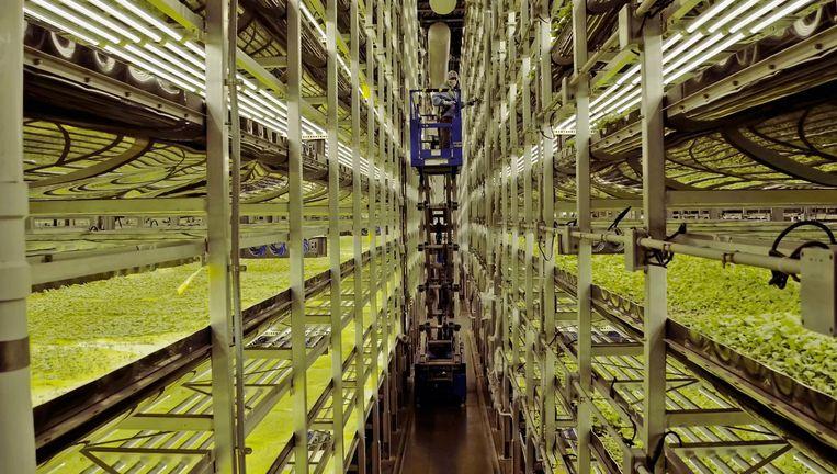 De aflevring van Tegenlicht - Boer zoekt voedselflat begint om 21.10 uur op NPO 2. Beeld