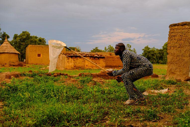 Rond kwart voor zeven, als de avond valt, is het tijd om muggen te vangen. Voordat hij snel met zijn net heen en weer zwiept, kijkt deze door Target Malaria ingehuurde man of er al genoeg muggen vliegen. Beeld Joost Bastmeijer