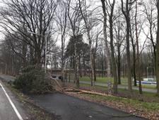 Omgewaaide boom blokkeert Nijmeegsebaan