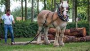 Dit najaar unieke cursus boomslepen met trekpaarden