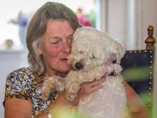 Wonder voor Cobie: verdwenen hondje Loeka na 2 weken weer thuis: 'Onwerkelijk!'