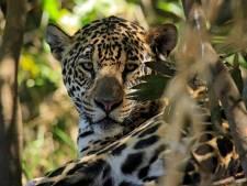 Les deux tiers de la faune sauvage ont disparu en moins de 50 ans, selon le WWF