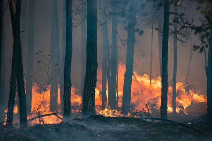 Een bosbrand woedt nabij het dorp Andreyevsky.