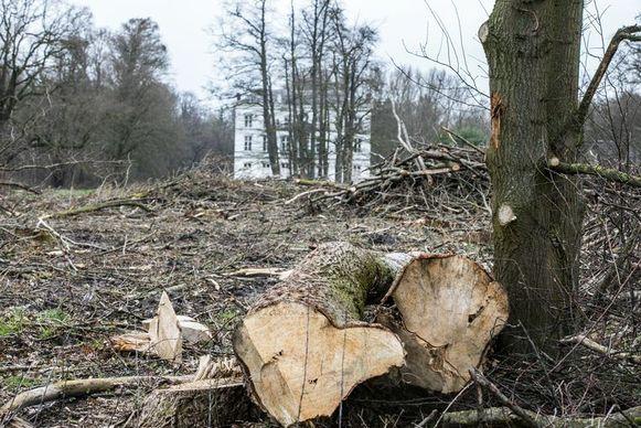 In het kasteelpark Jongenbos in Kortessem werden begin maart massaal bomen gekapt door de familie Appeltans, zonder toelating.