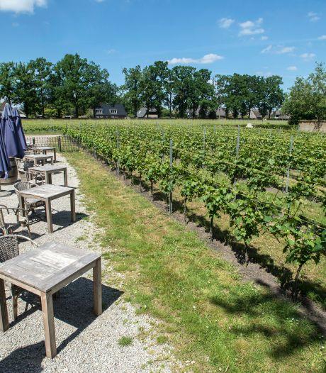 De wijngaard is een kerkhof geworden; oogst na één nachtje vorst naar de knoppen