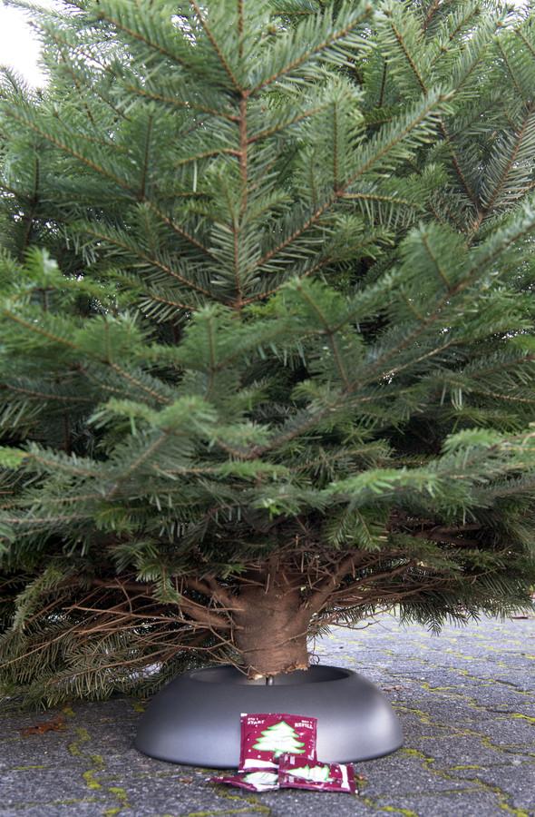 """Belangrijk: zorg dat de boom genoeg water krijgt. """"Een centimeter onder de rand van de schaal, bijvoorbeeld. En controleer het elke dag."""" Af en toe een zakje voeding wordt ook aangeraden, al helpt een schepje suiker ook."""