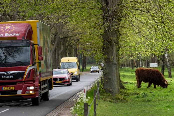 De in 1962 aangelegde smalle landbouwweg Guldenberg is volgens omwonenden niet geschikt voor het huidige intensieve gebruik.