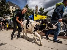 Inspectie schrapt verder onderzoek naar meebrengen kalveren naar boerenprotest in Arnhem