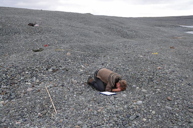 De IJslandse boswachter en onderzoeker Hlynur Steinsson moet op zijn knieën om met een vergrootglas een klein plantje op de eindeloze grindvlakte te bekijken. Tot 2014 lag hier nog ijs van de Breidamerkurjokull-gletsjer. Deze gletsjer is afkomstig van de Vatnajokull-ijskap. Die smelt en verliest jaarlijks gemiddeld 100 tot 300 meter in lengte. Beeld Getty Images
