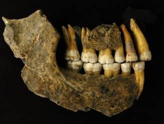 Neanderthalers verdwenen duizenden jaren eerder uit België dan gedacht