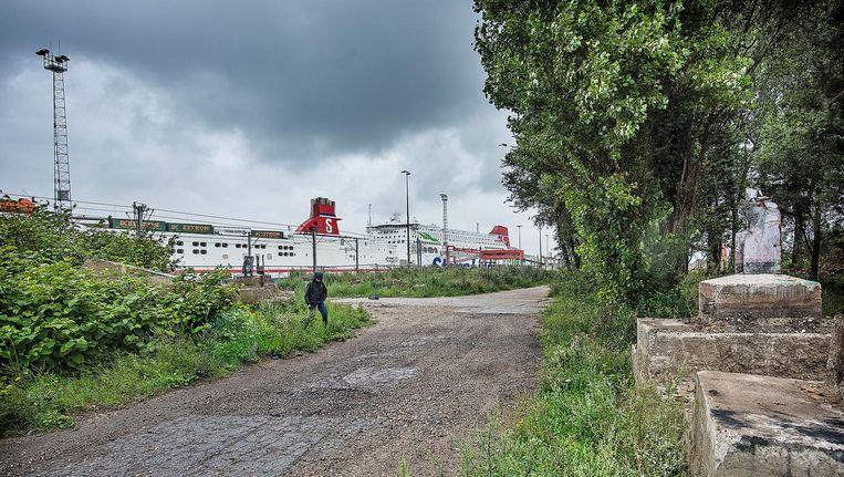 Het Stena Line-terrein in Hoek van Holland. Sinds twee maanden is het gehele terrein omheind met een metershoog metalen hek met schrikdaad. Beeld null
