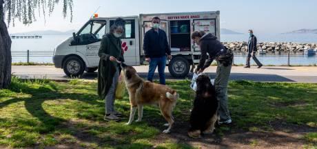 Istanboel koestert straathonden: 'Weinig plekken waar honden zo zorgeloos leven'