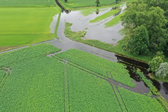 Beelden van de percelen van akkerbouwer Toon van der Aa in Soerendonk, nadat de Buulder Aa is overstroomd.