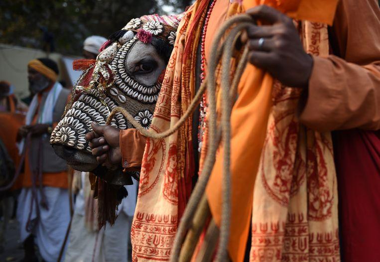 Februari 2016: een betoging in New Delhi, voor meer ontzag voor de koe. Beeld AFP
