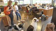 VIDEO. Honden van ZEB-personeel palmen hoofdzetel in (want bedrijf doet mee aan 'Take Your Dog To Work Day')