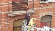 Hond tijdens stormweer ganse nacht opgesloten op piepklein terras