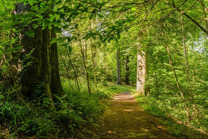 In een bosje in Menen sloeg de dertiger de tiener met een tak.