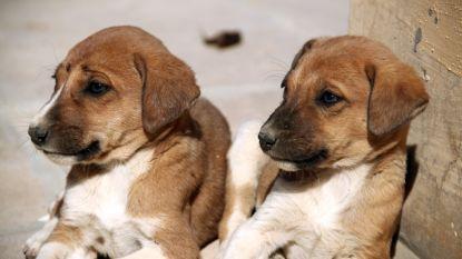 Triest om je overleden hond? In VS en Korea koop je al een gekloond huisdier vanaf 31.600 euro