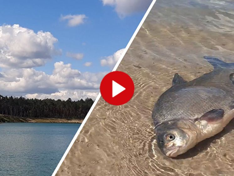 Met man en macht vissen redden uit de Zandenplas