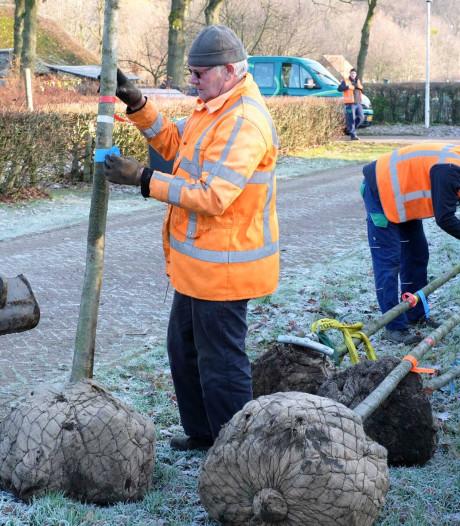 Eerste van 4000 bomen geplant in Park Schothorst