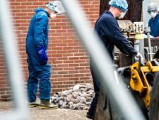 'Ruim alle nertsenfokkerijen preventief als besmettingen aanhouden'