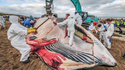 Aangespoelde vinvis van De Haan stierf wellicht natuurlijke dood