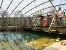 Visnetten krijgen een tweede leven in Burgers' mangrove