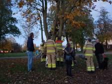 Brandweer redt jongetje uit boom