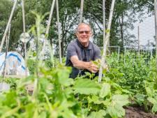 Groente in Almelose moestuinen liggen er verzorgd bij: 'Hier kan geen supermarkt tegen op'