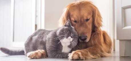 Les animaux de compagnie huit fois plus infectés au contact de malades du Covid