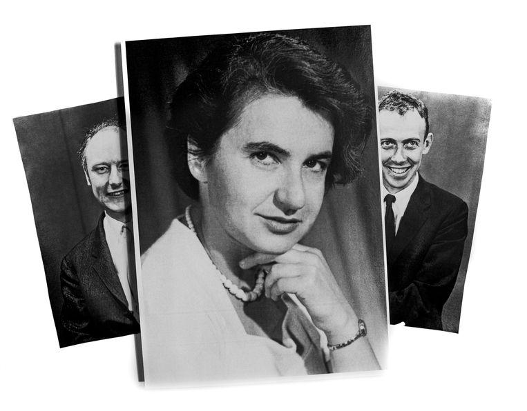 Rosalind Franklin deed dna-pionierswerk. James Watson (links) en Francis Crick stalen haar onderzoeksresultaten. Beeld Getty