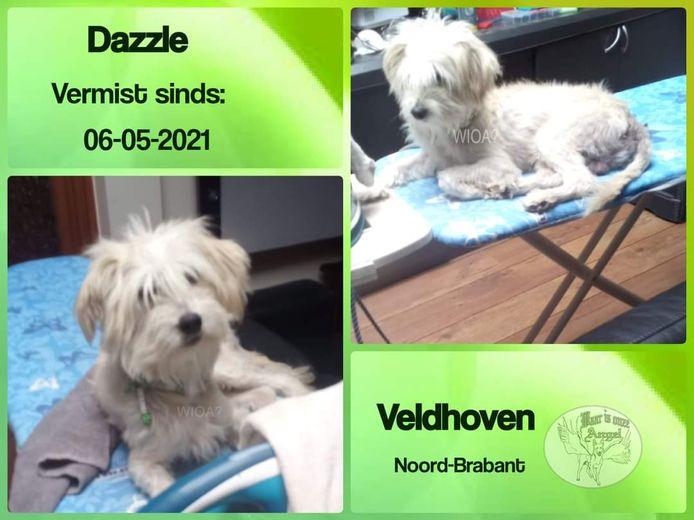 De vermiste Dazzle.