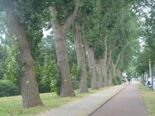 Kampen stelt commissie in voor klachten over bomen