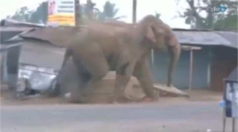 Oei! Verdwaalde olifant sloopt dorpje in India