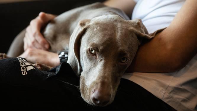 """Werknemer krijgt ziektebriefje van 14 dagen """"omdat hond ziek is"""", arts riskeert sanctie"""