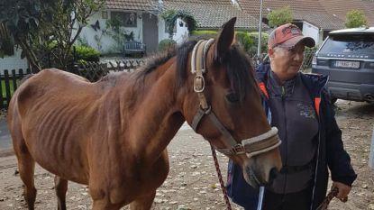Een mirakel! Op hol geslagen pony Black vier maanden na verdwijning teruggevonden in natuurreservaat