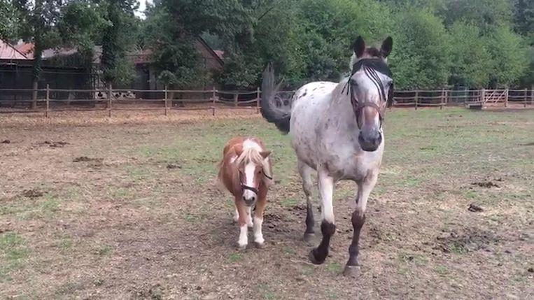 Afbeeldingsresultaat voor blind paard en pony geadopteerd