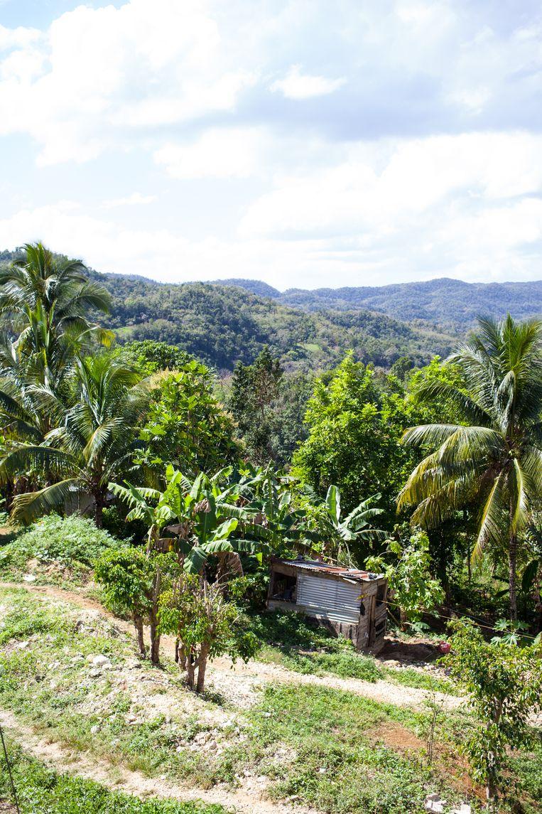 Jamaica heeft niet alleen stranden, ook het binnenland biedt prachtige uitzichten. Beeld Ringo Gomez Jorge
