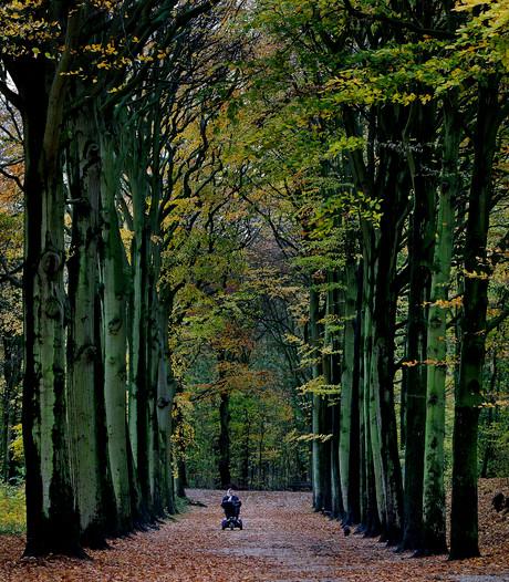 Staatsbosbeheer: Vermijd het bos in het weekeinde