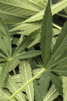 Drugscriminelen actiever van het platteland geweerd: 'Spruitjes van een met drugschemicaliën bemest veld, dat baart zorgen'